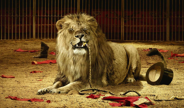 leão, leões, massarti, branch, раскрыть, блять, foi,