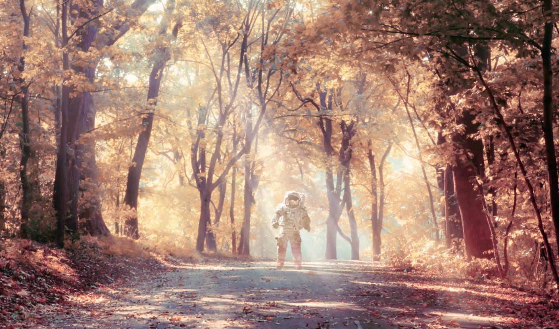 ,, лесной, природа, лес, путь, дерево, солнечный свет, свет, роща, утро,  golden autumn, изображение, фотография, пейзаж, иллюстрация,