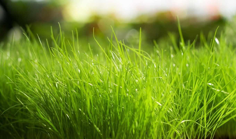 обои, трава, широкоформатные, природа, свой, расте