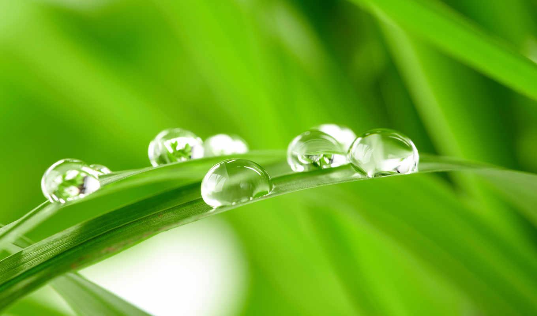 капли, трава, зелёная, травинка, зелёный, роса, вода, wallpaper, free, to, картинку,