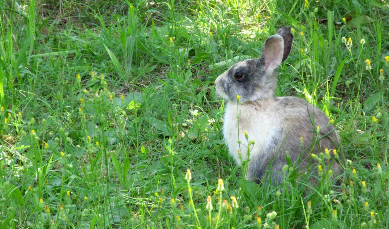 кролик, cottontail, заяц, animal, snappygoat, bestof, гора, трава, bunny