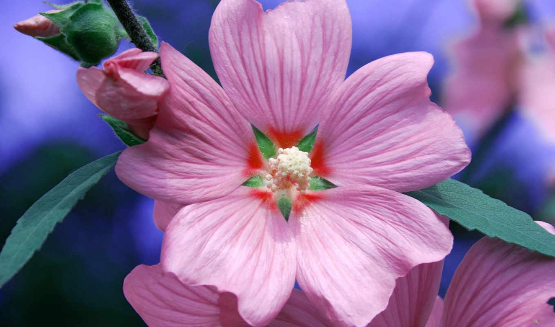 resimleri, çiçek, flowers, цветы, ziyaretci, uzay, bir,