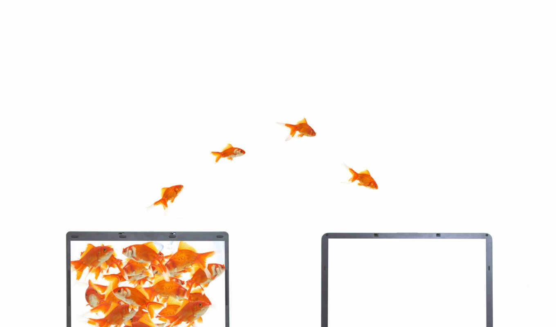 goldfish, notebook