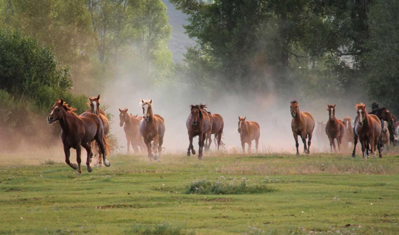 бег, кони, природа, табун, horses, картинка, картинку,
