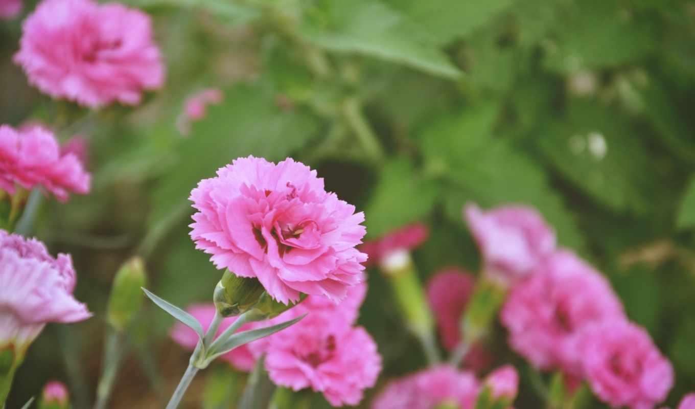 марта, цветы,