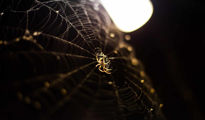 паук, web, янв,