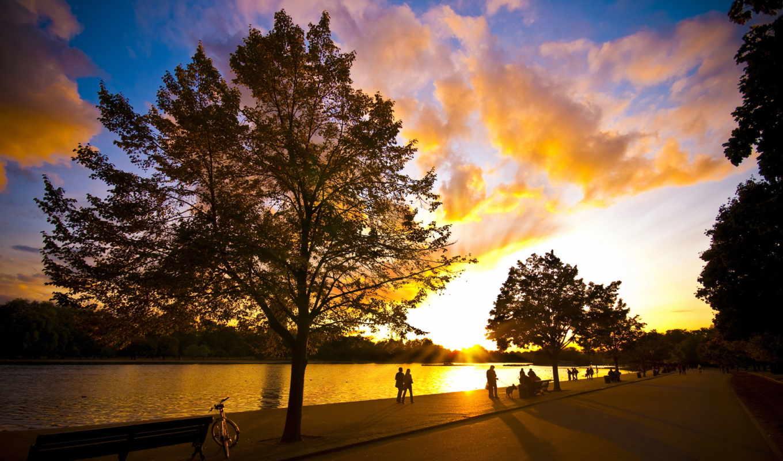 park, деревя, фотографий,