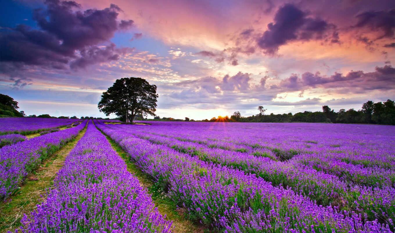 природа, красивые, природы, места, landscape,