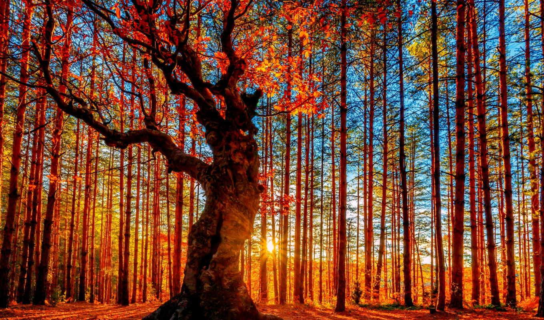 коллекциях, яndex, коллекцию, посмотрите, осень, леса, природа, лист,