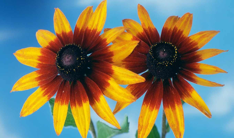цветы, hana, king, шаман, красивых, девушек, дек, подборка, flowers,