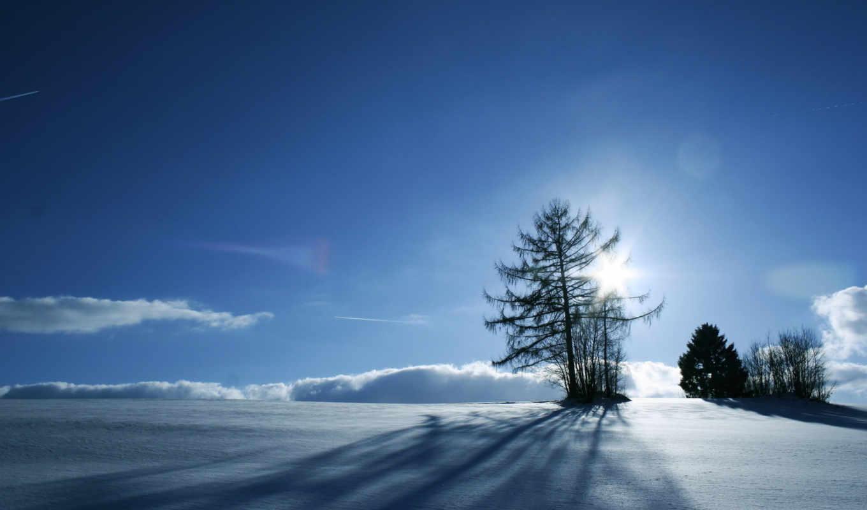 зимний, солнце, дерева, den, ветви, пейзаж, сквозь, les, вечер, от,