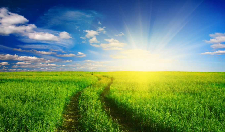 трава, зелёный, free, desktop,