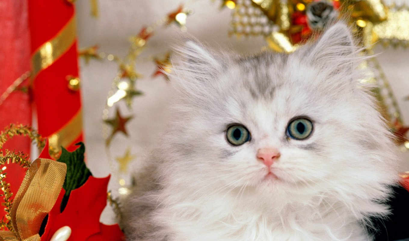christmas, kitten, navidad, his, fotos, amazing, animals, are, animal, cats, desktop, just, download, can,