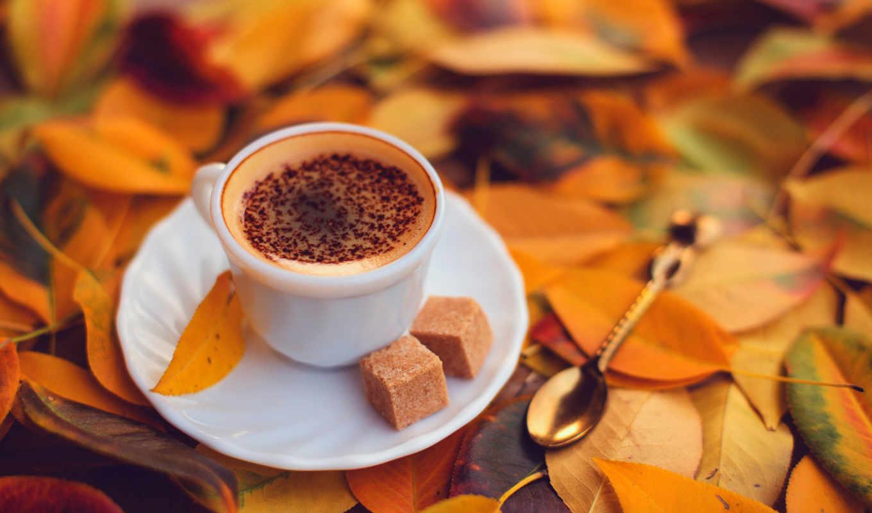 кофе, шоколад, блюдце, пена, чашка, листья,