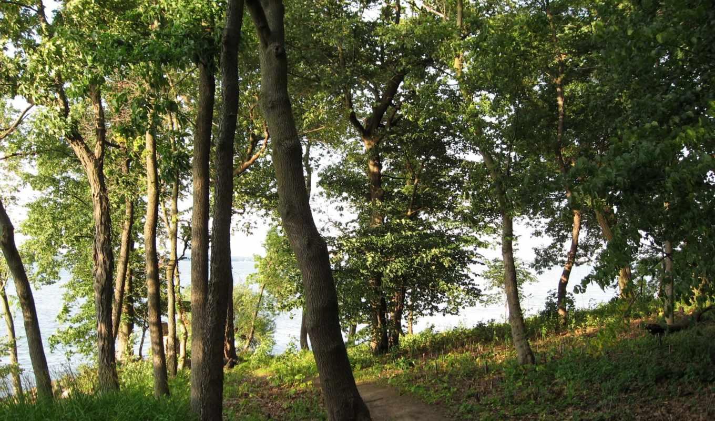 изображение, desktop, фото, тематика, природа, free, trees, foto,