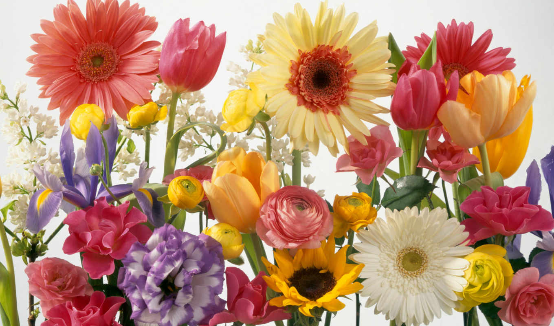 flowers, цветы, seeds, сорт, facebook, covers,