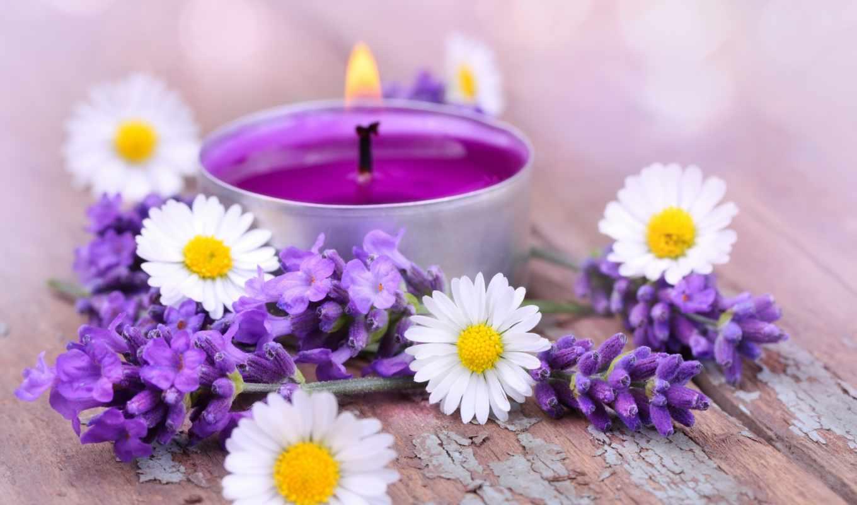 цветы, ромашки, свечи, lavender, разное, качество, высокое,