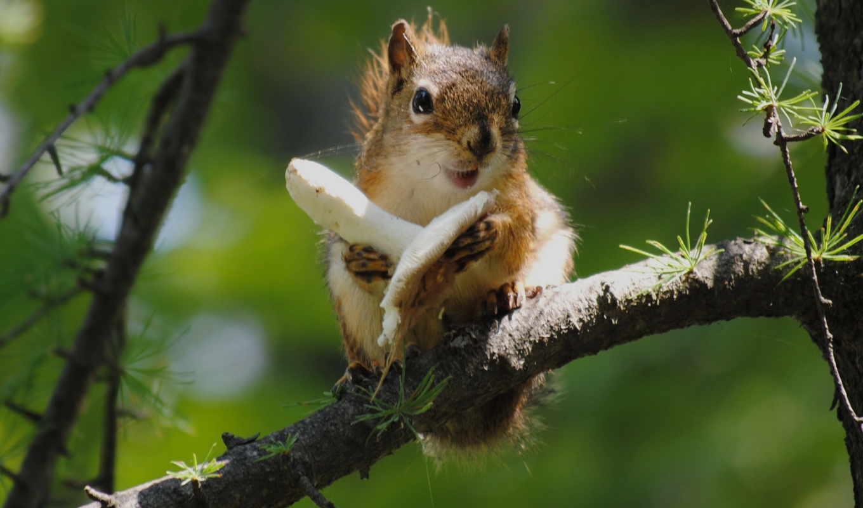 Белочка на ветке дерева без смс