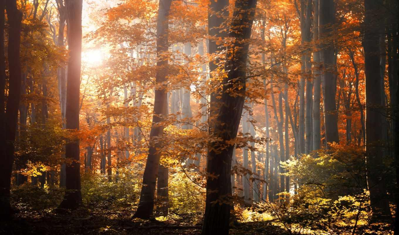 природа, лес, осень, листья, пасть, желтые,