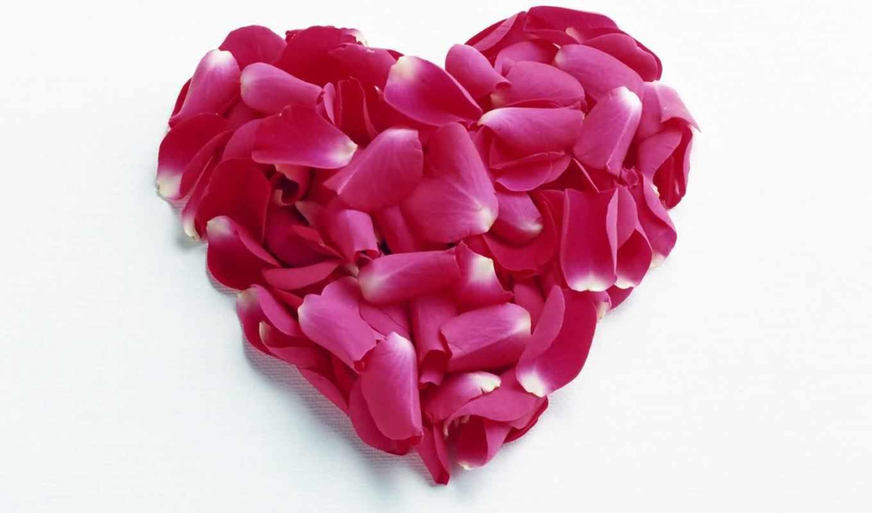 сердце, лепестков, роз, февр, love, life, страсть,