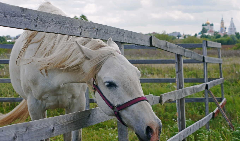лошадь, animals, лошадей, загоне, лошади, high,