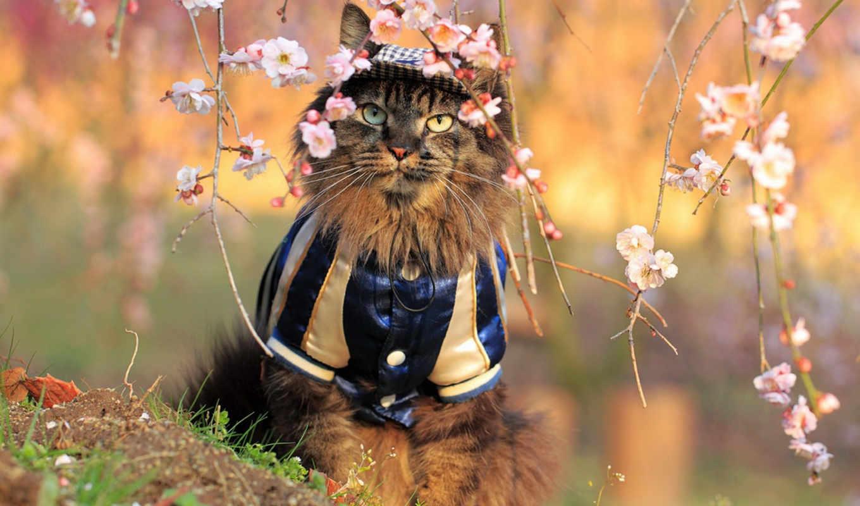 цветы, кот, костюм, сидит, Сакура, животные,