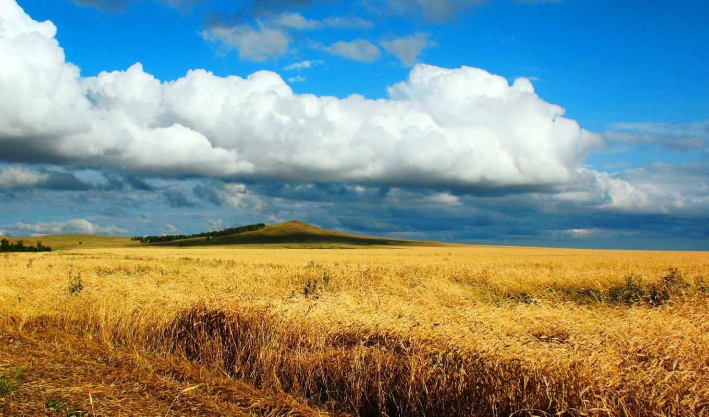 поле, пшеницы, песнь, жаворонка, урожая, колосья, коллекция, пшеница, совершенно, свой, созревшей,