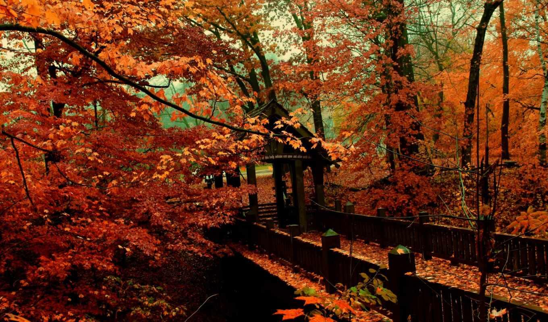 осень, пасть, мост, season, картинка