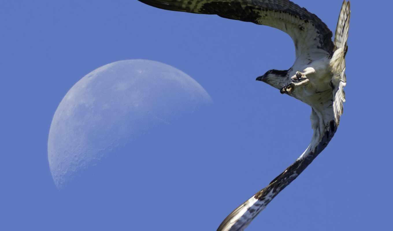 животные, сокол,falcon,moon landing,посадка на луну,