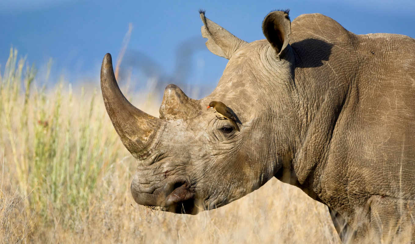 rhino, you, download, resolutions, desktop, above, high, if, widescreen, don, looking, then, find, are, resolution, exact,