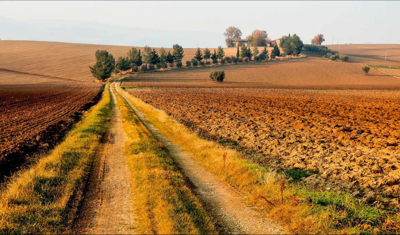 дорога, лес, name, категория, size, июня, осень,