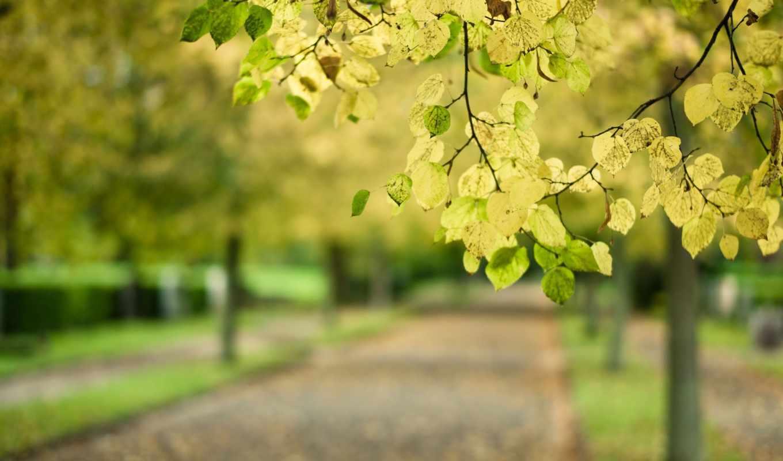 листья, дерево, макро, ветка, дорога, размытость, парк,