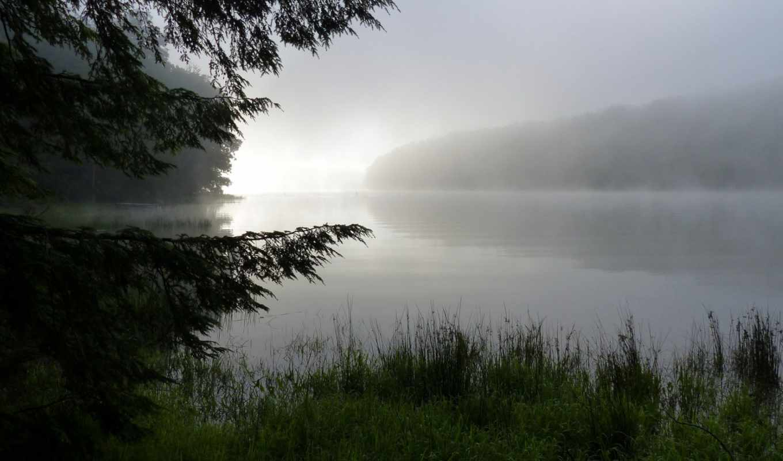 природа, туман, утро, роса, трава, лес,