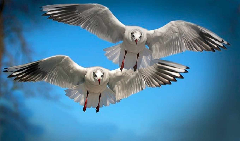 птицы, полет, разделе, марта, freedom, радио,