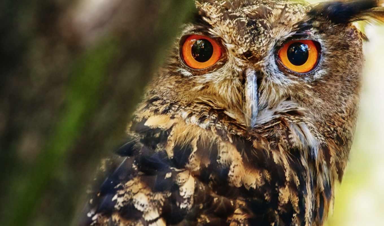 сова, kartinka, от, zhivotnye, vzglyad, птицы, самые, количество, колибри, мб,