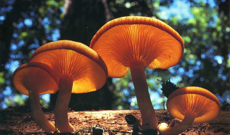 cogumelos, mushroom, deep, alimentação, подкатегория, cogumelo, são, меню,