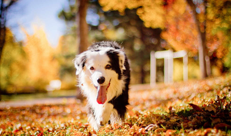 dogs, собака, pet, puzzle, magnetic, пасть, tochka, осенние,