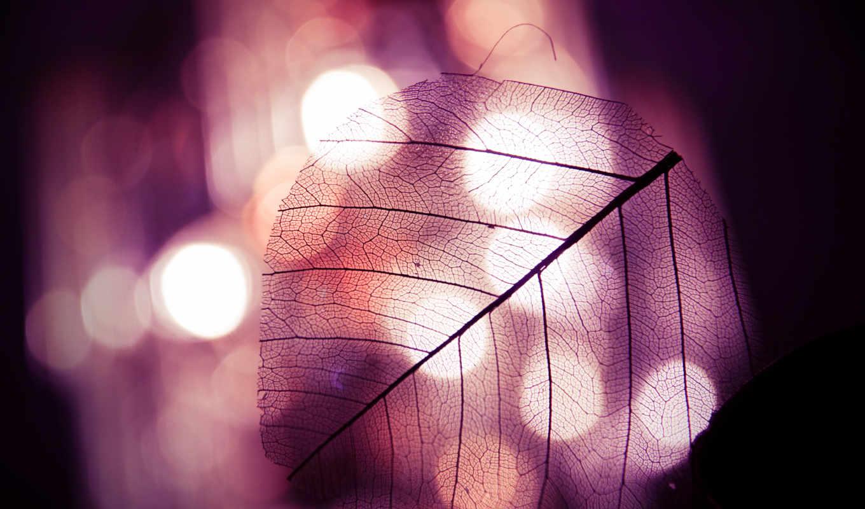 leaf, свет, листок, настроение, free, осень, огни, прозрачный,
