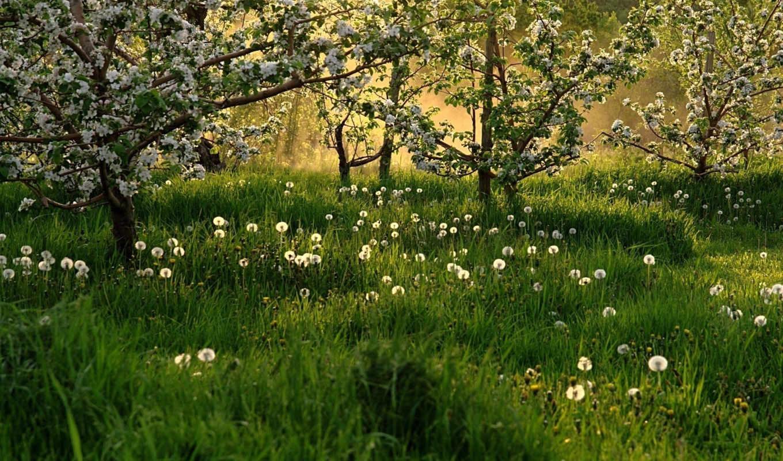 деревья, луг, трава,