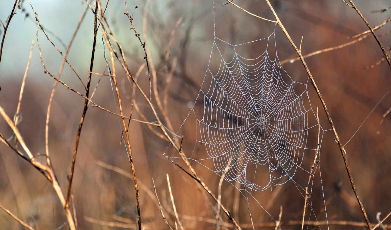 web, water, после, дождя, ветки, капли, растительность,