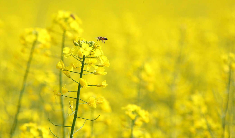 цветы, fone, желтые, желтом, яркий,