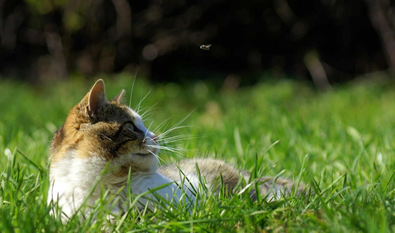 кот, весна, трава, fly, отдых, hunting, движение, ус, зеленое,