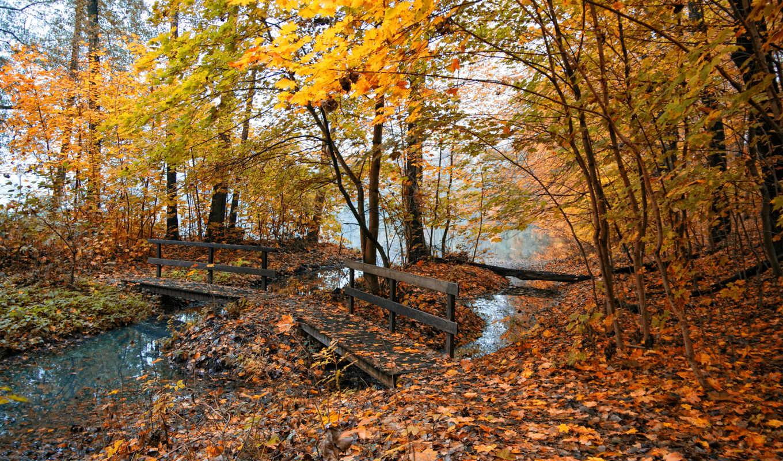 природа, листья, осень, осенние, места, деревья, фотографии, мостик,