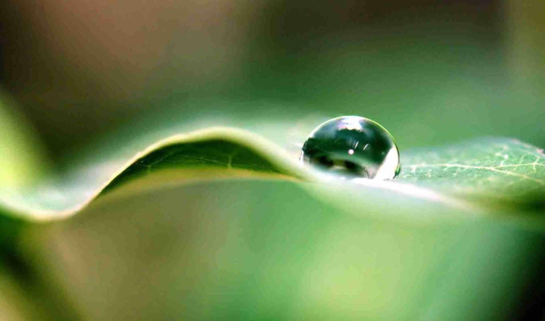 water, drop, drops, nature,
