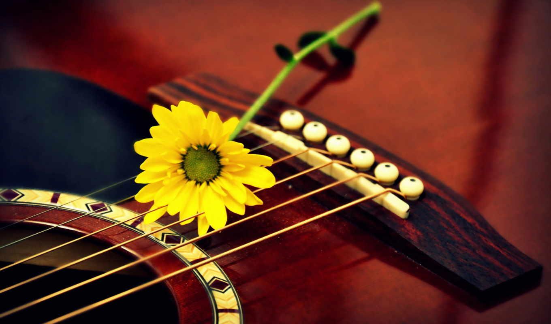 гитара, музыка, цветы, макро, девушка,