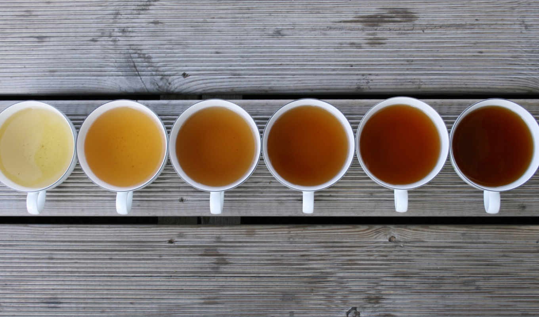 чая, китайского, чай, дегустации, клубе, чайном, начинаем, mir, открытый, же, видов,
