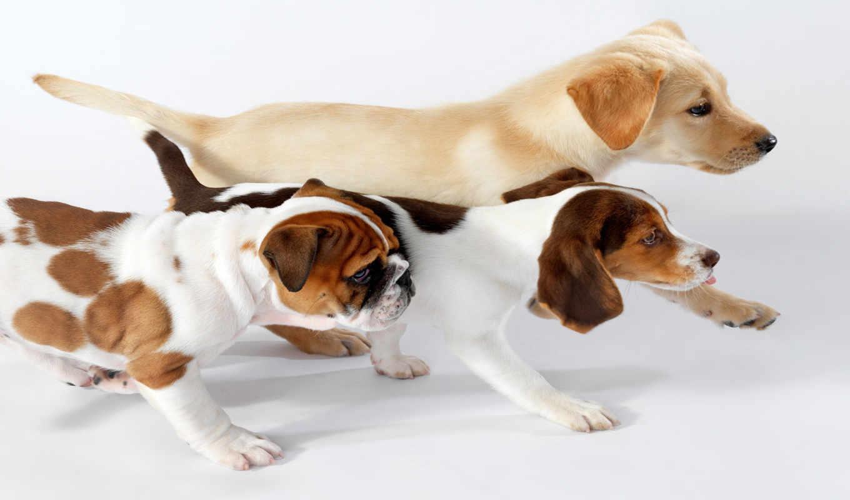 animals, lennette, newell, бег, животных, prosto, собаки, февр, красивые, смешные,