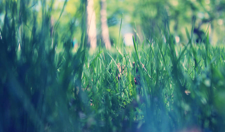 весна, утро, park, макро, трава, зелёная,