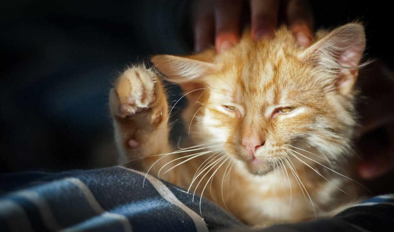 кот, duvar, funart, sleepy
