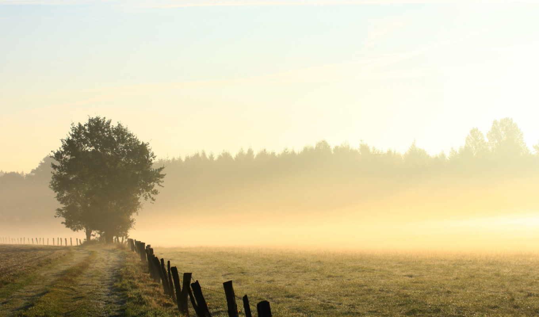 туман, прекрасных, утренний, подборка, фотографий, прекрасен, интересно, завораживает, манит,